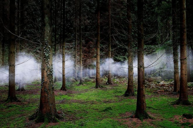 smoky-forest