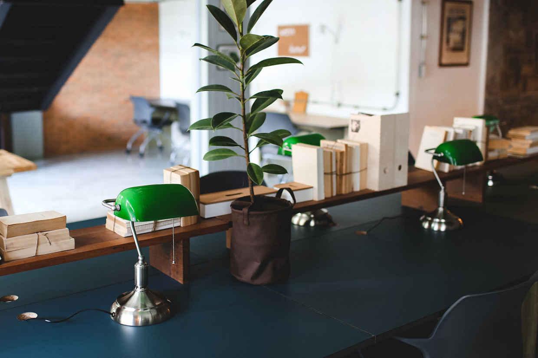 desk-plant